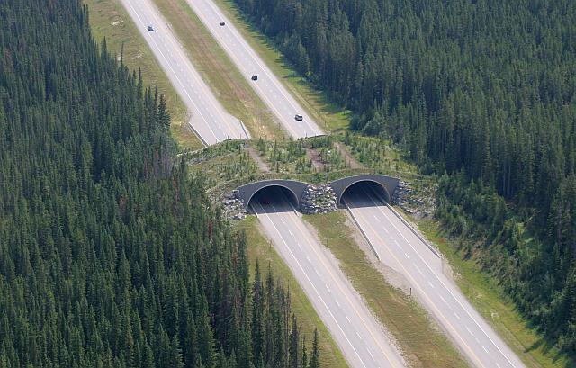 banff animal crossing